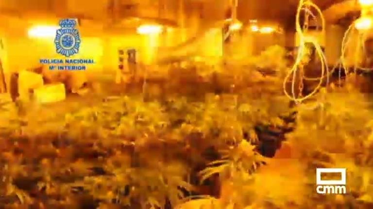 Desmantelada en Puertollano una red de plantaciones de cultivo