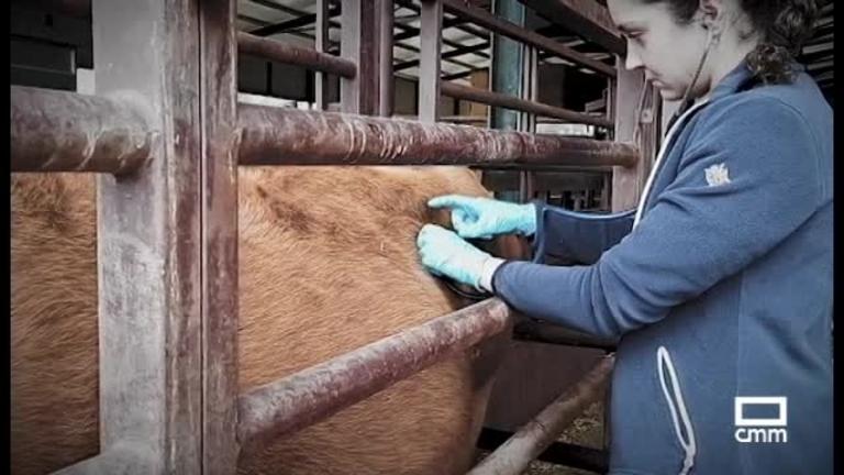 Veterinarios rurales, esenciales e infravalorados