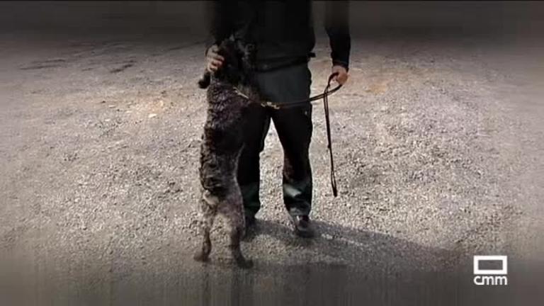 Detección de drogas en la A5 con perros policía