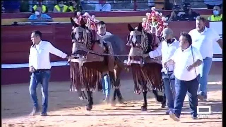 Toros desde Pedro Muñoz