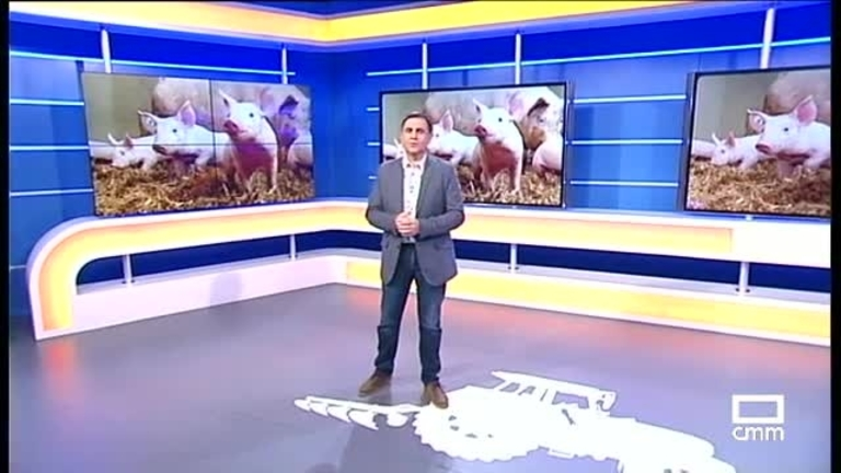 El Campo | Temor del sector del porcino por el atasco de Alemania