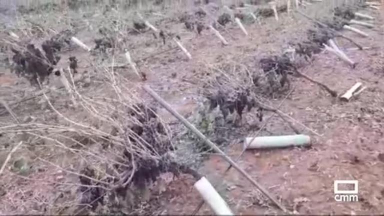 El Campo | La lluvia y el fuerte viento causan graves daños