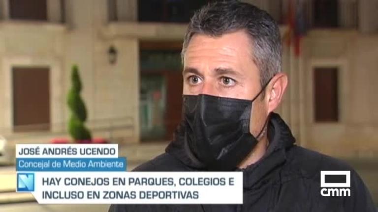 Plaga de conejos en Campo de Criptana: se comen el césped y colchonetas del complejo deportivo