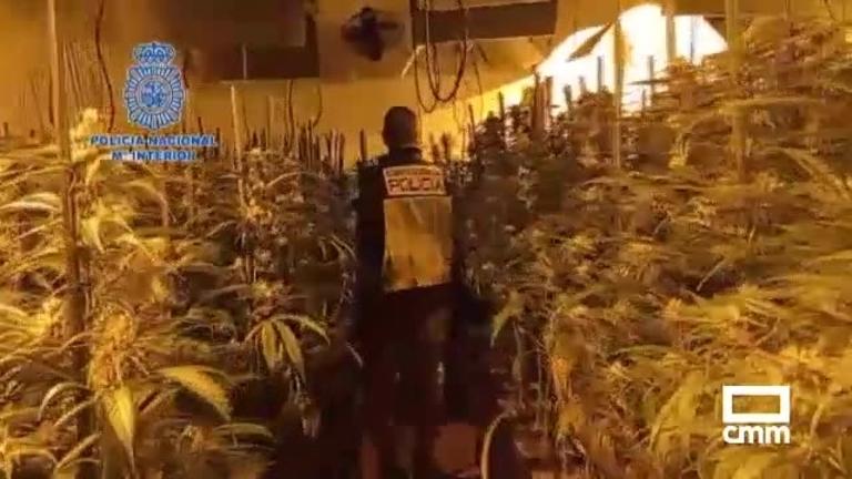 Desarticulan una red de cultivo y tráfico de marihuana que operaba en La Sagra toledana