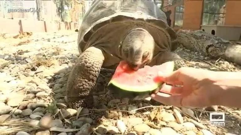 Animales exóticos condenados a vivir sin libertad