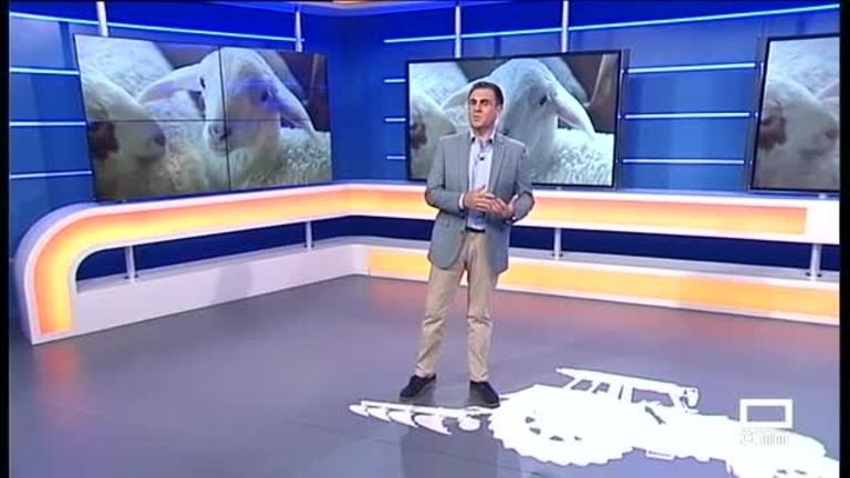 El Campo | El cordero afronta con incertidumbre el final de año