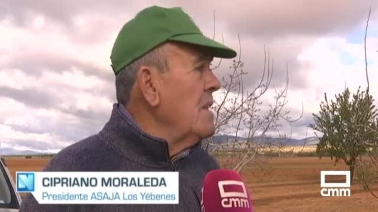 Las heladas de primavera causan 'importantes pérdidas' en la cosecha de almendra, en Albacete, Cuenca y Toledo