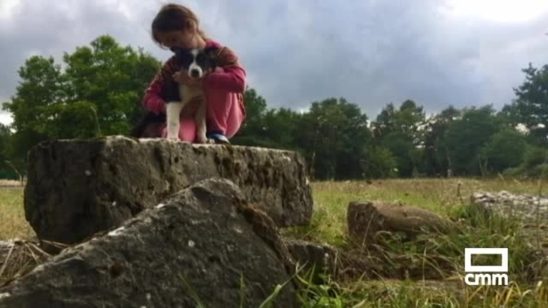 Mil euros de recompensa por Aruck, un perro que pudo desaparecer en Bonete (Albacete)